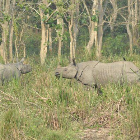 2 rhinos in Chitwan National Park, Nepal