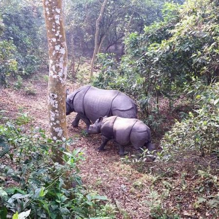 Mother and child rhino in forest of Chitwan National Park, Nepal